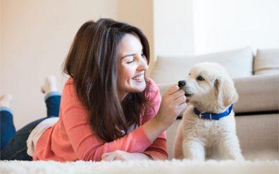 Kada je štene spremno za odlazak u novi dom?