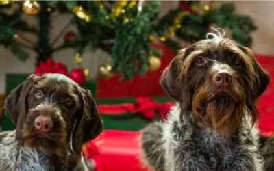 8 popularnih blagdanskih namirnica koje psi ne bi trebali jesti