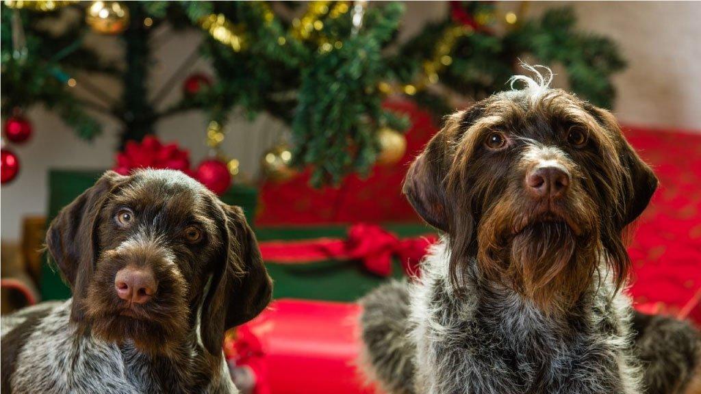 Psi i Božić