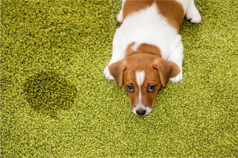 Preplašeno štene leži uz lokvicu; izvor: ulkas © 123rf.com