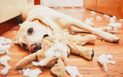 Kako naučiti psa da ostaje sam kod kuće