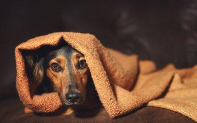 Pas u potresu i kako mu pomoći