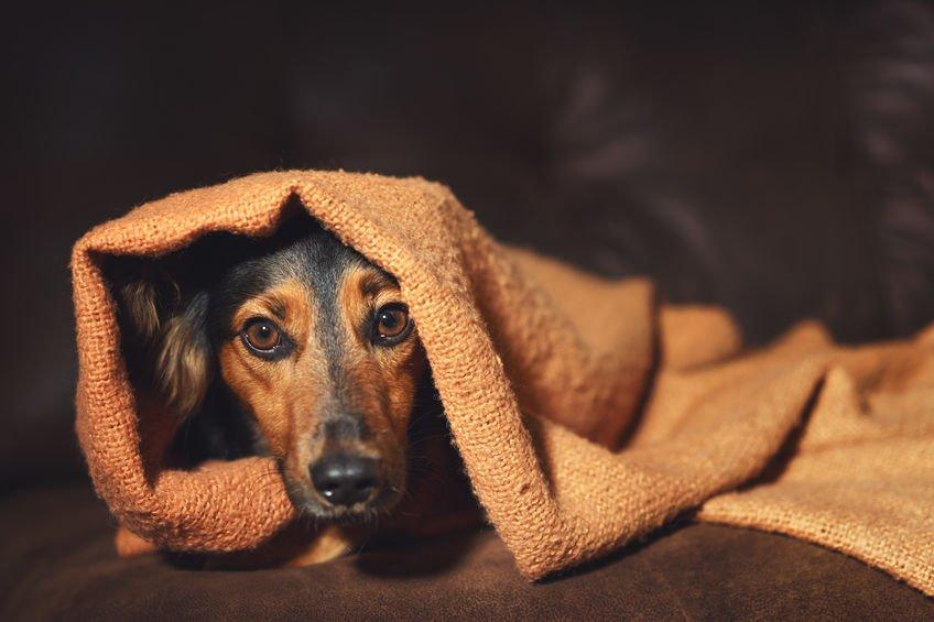 pas u potresu